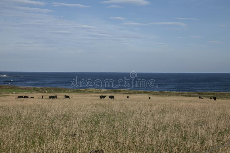Views of Scotland, the UK - fields and blue skies. This image shows a view of Scotland, the UK. It was taken on a sunny day in summer 2016. We can see some stock photography