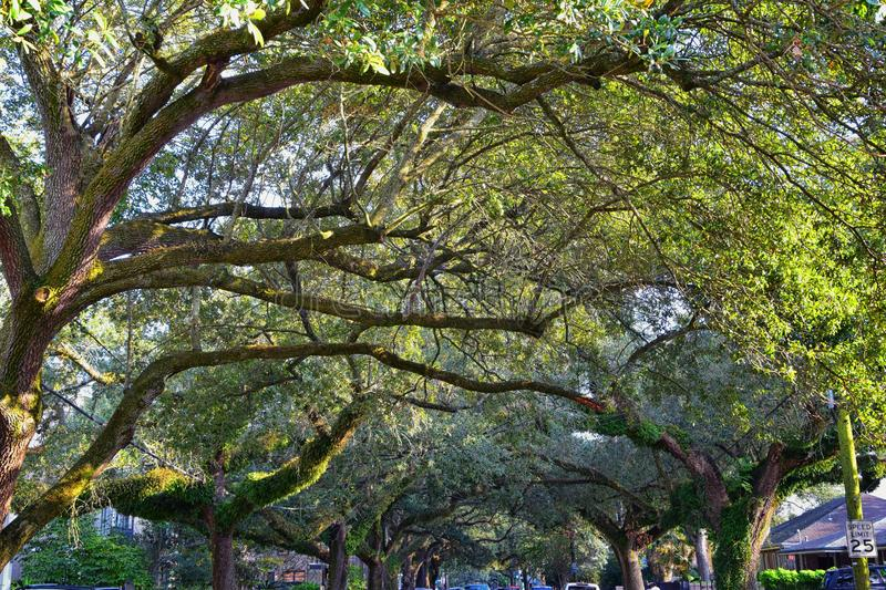 Views of trees and unique nature aspects surrounding New Orleans, including reflecting pools in cemeteries and the Garden District. In Louisiana, United States stock photo