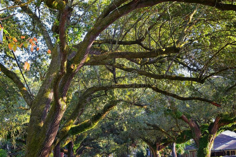 Views of trees and unique nature aspects surrounding New Orleans, including reflecting pools in cemeteries and the Garden District. In Louisiana, United States stock image
