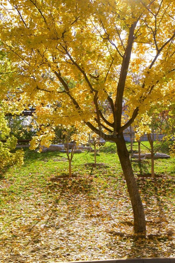 Yuyuantan Park , Beijing, China. Views of Yuyuantan Park in autumn, Beijing, China royalty free stock images
