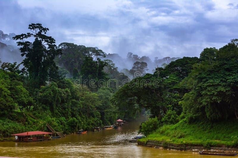 Vigia em Taman Negara, Malásia fotografia de stock