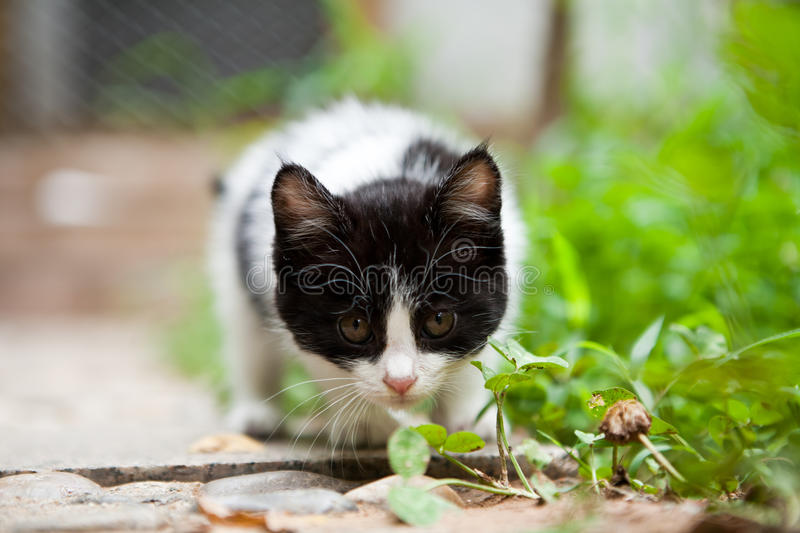 Download Vigilance cat stock photo. Image of white, crouch, outdoor - 14853286