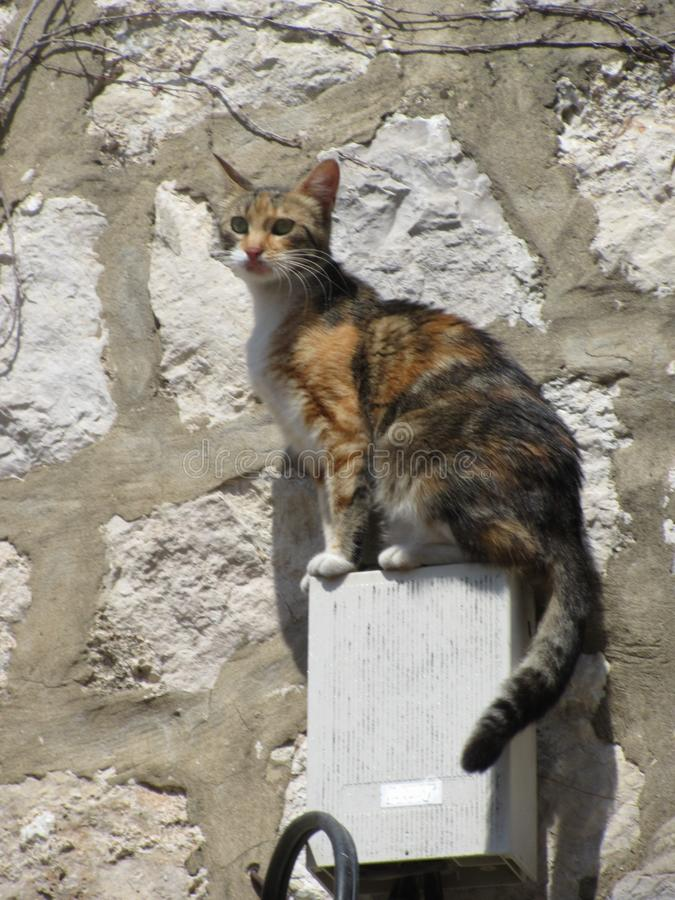 Vigilant Cat. A lovely cat posing high above the tourists in a Croatian afternoon summer`s day stock photography