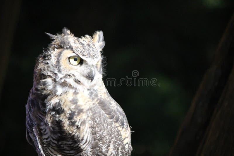 Vigilante de la noche imagen de archivo libre de regalías