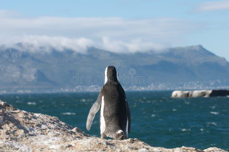 Vigilanza del pinguino fotografie stock