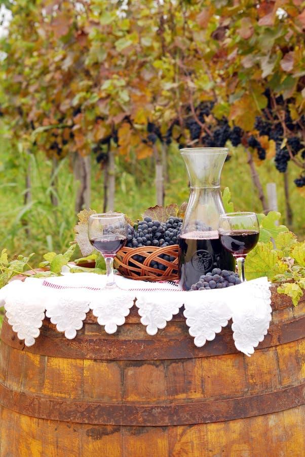 Vigna con l'uva ed il vino fotografia stock