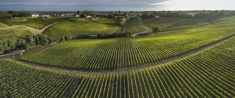 Vigna del Bordeaux di vista aerea di estate, mers del deux di Entre fotografia stock