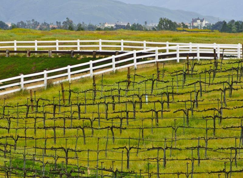 Vigna del paese di vino, California del sud immagini stock libere da diritti