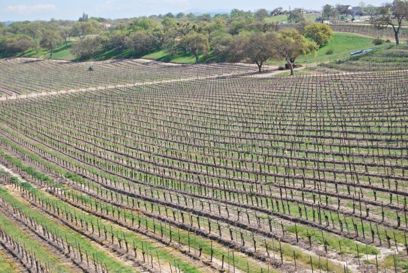 Vigna del vino, Napa Valley, California immagini stock