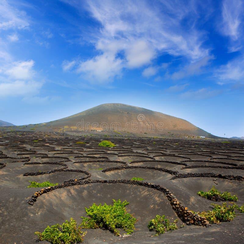 Vigna di Geria della La di Lanzarote su terreno vulcanico nero immagini stock