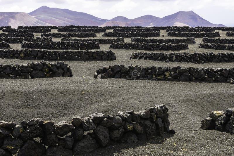 Vigna di Geria della La di Lanzarote su terreno vulcanico nero immagine stock