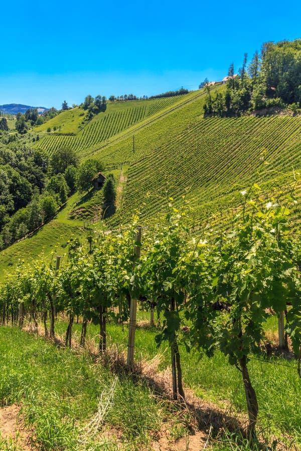 Vigna di Styrian Toscana, Stiria, Austria fotografie stock libere da diritti