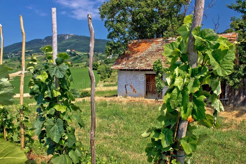 Vigna e cottage tradizionali in Kalnik fotografie stock