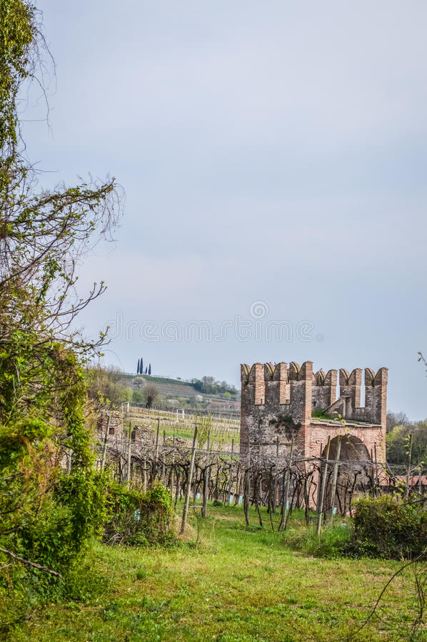 Vigna e torre della città murata italiano antico di Soave immagini stock