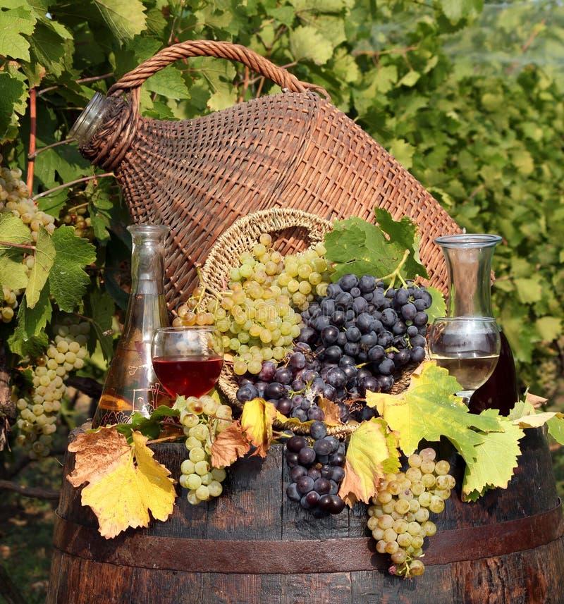 Vigna e vino immagini stock libere da diritti