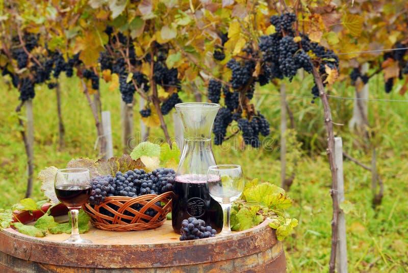 Vigna e vino rosso fotografie stock