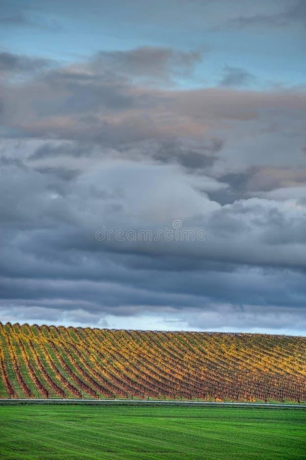 Download Vigna Gialla Di Autunno Sotto Il Cielo Nuvoloso Fotografia Stock - Immagine di nubi, paese: 7303462