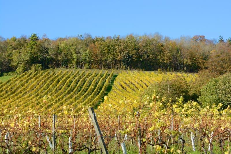 Download Vigna inglese in autunno fotografia stock. Immagine di viti - 56885750