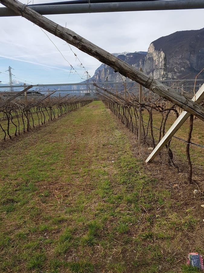 Vigna in Italia fotografia stock