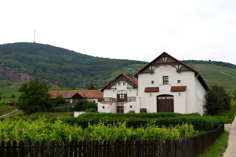 Vigna in Tokaj, Ungheria immagini stock