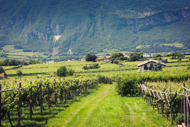 Vigna in Trento fotografia stock libera da diritti
