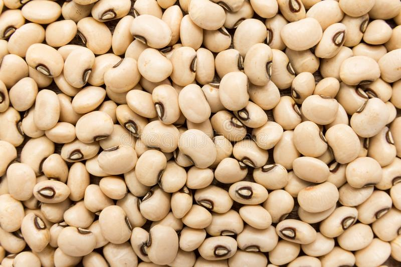 Black Eyed Pea legume. Closeup of grains, background use. royalty free stock images
