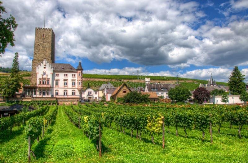 Vigna vicino alla fortezza medievale Boosenburg del castello in Ruedesheim, Assia, Germania immagine stock