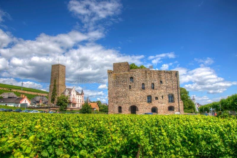 Vigna vicino alla fortezza medievale Boosenburg del castello in Ruedesheim, Assia, Germania immagine stock libera da diritti