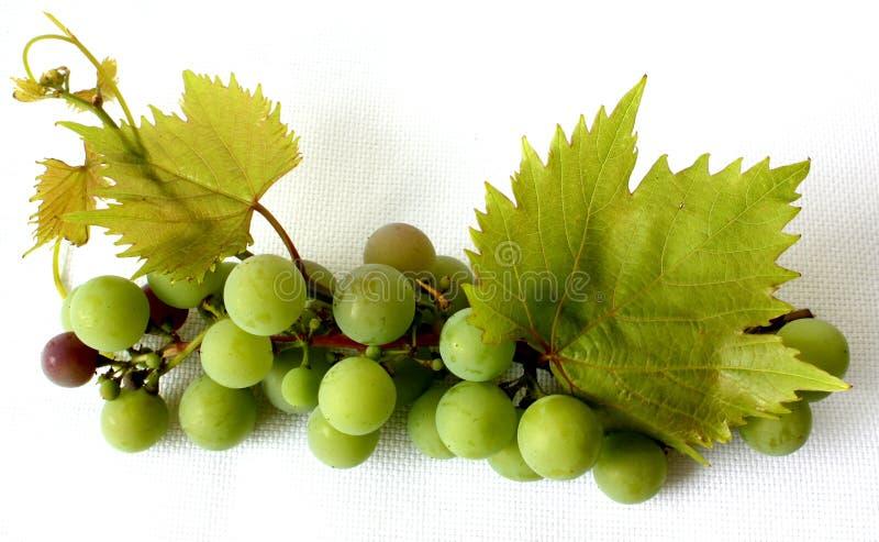 Vigna (vitis vinifera) - bacche con i fogli. fotografie stock libere da diritti
