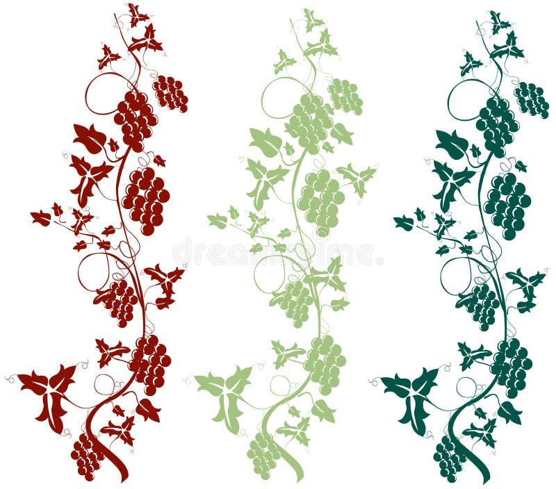 Vigne illustration stock