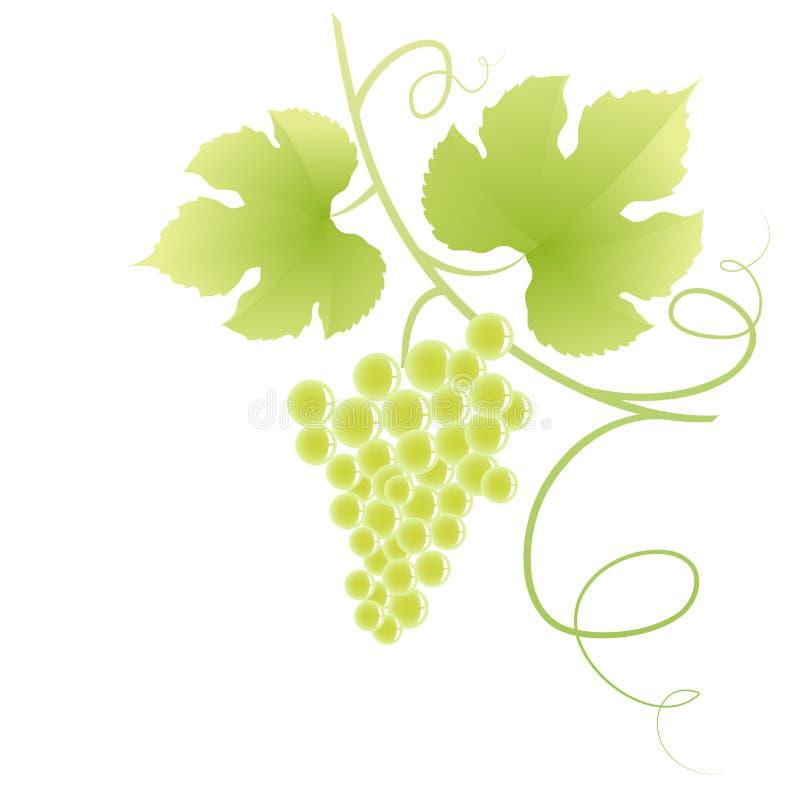Vigne. illustration de vecteur