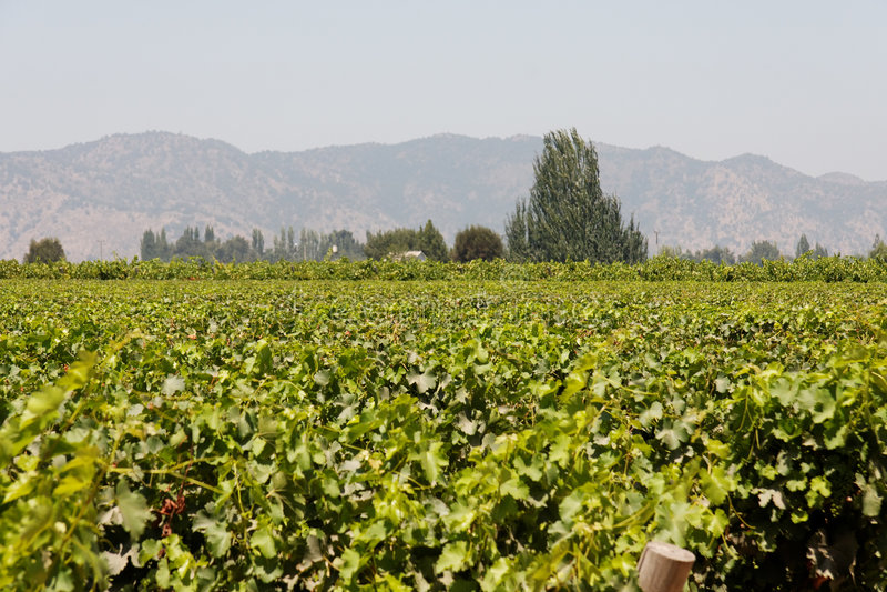 Vigne au Chili image stock