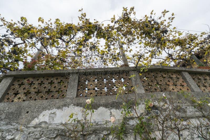 Vigne au-dessus d'un vieux mur photographie stock libre de droits