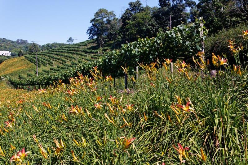 Vigne avec des fleurs image libre de droits
