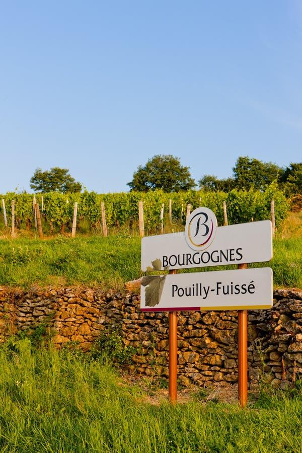 Vigne, Bourgogne, France photos stock