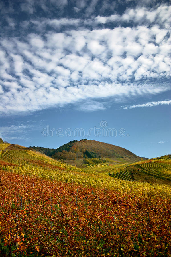 Vigne d'automne chez la Moselle image stock