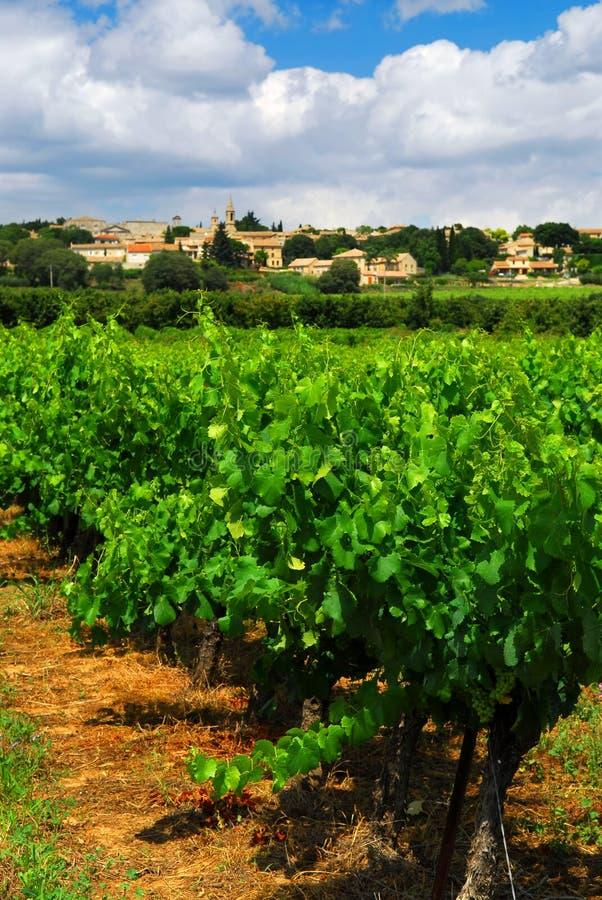 Vigne dans la campagne française photos stock