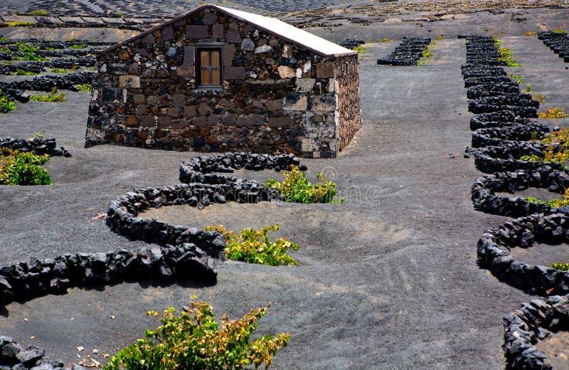 Vigne de Geria de La de Lanzarote sur la saleté volcanique noire image stock