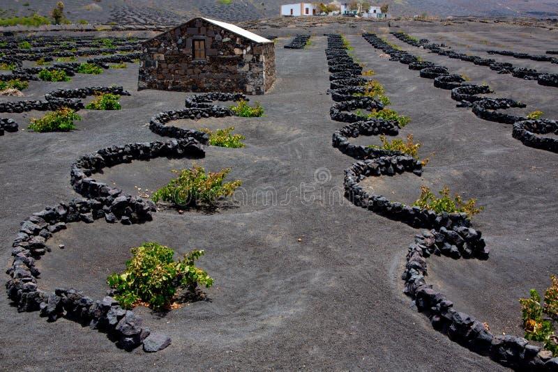 Vigne de Geria de La de Lanzarote sur la saleté volcanique noire image libre de droits