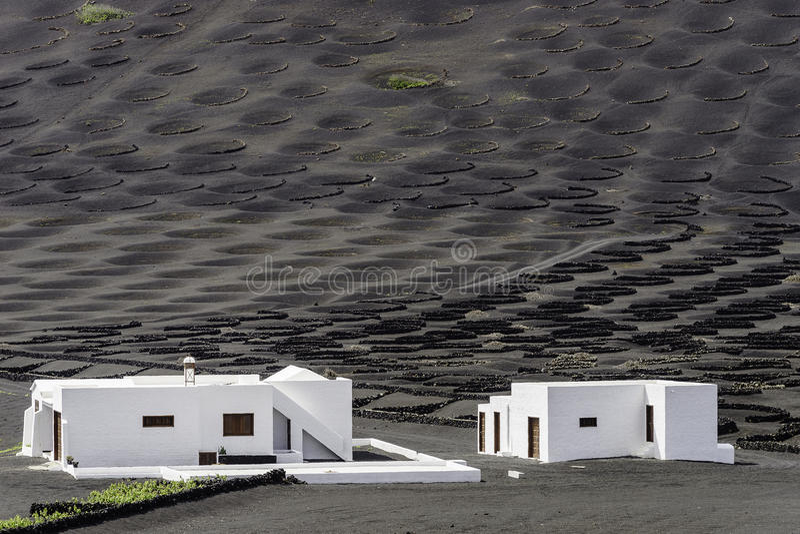 Vigne de Geria de La de Lanzarote sur la saleté volcanique noire photographie stock