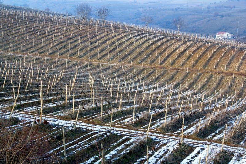 Vigne de l'hiver photographie stock libre de droits