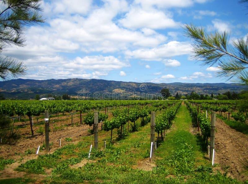Vigne de Napa photographie stock