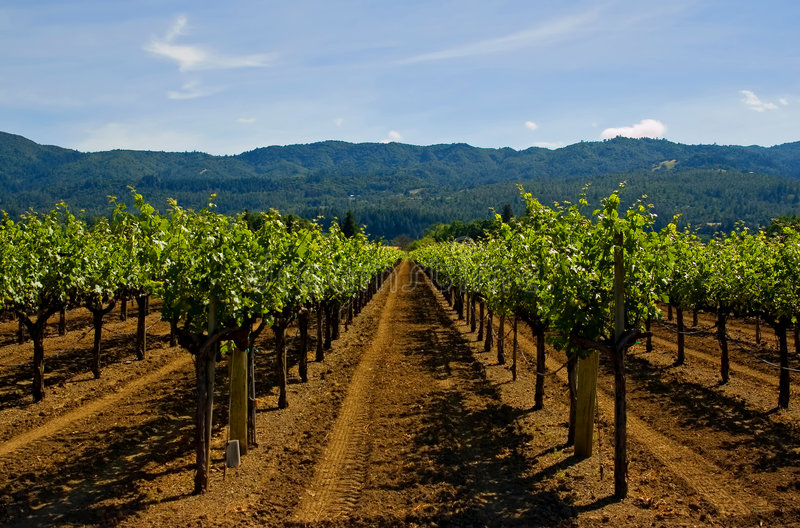 Vigne de Napa Valley image stock