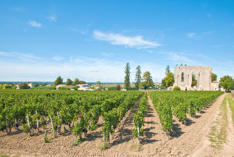 Vigne de Saint-Emilion image libre de droits