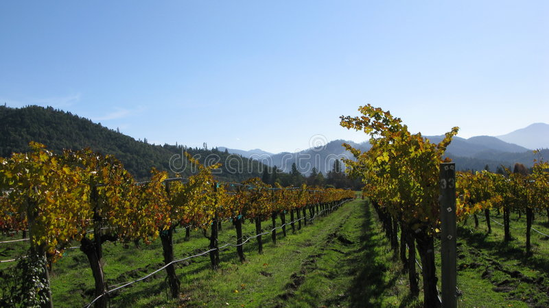 Vigne della valle di Applegate fotografie stock libere da diritti