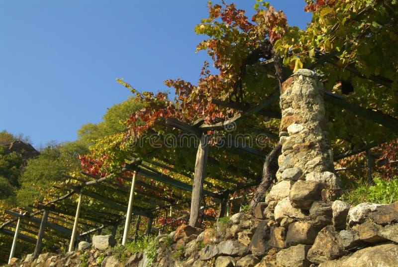 Download Vigne Di Canavese - Vicino Al Piccolo Villaggio Cesnola, Italia Fotografia Stock - Immagine: 103085124