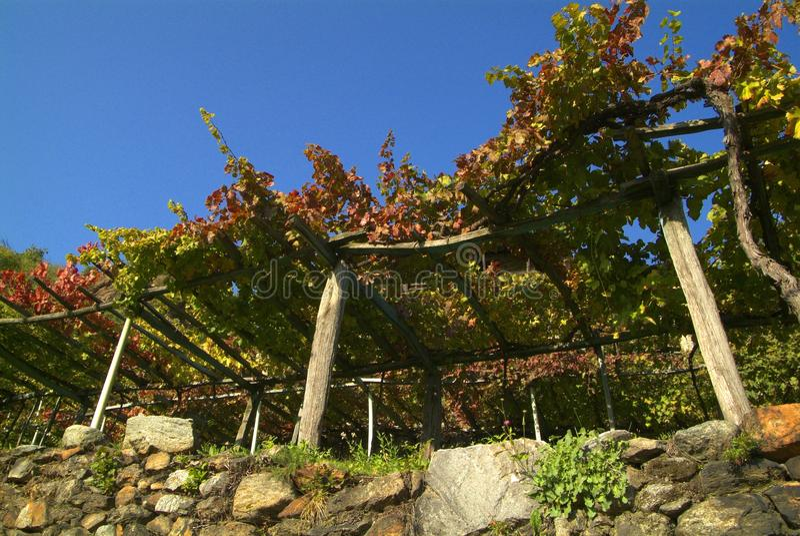 Download Vigne Di Canavese - Vicino Al Piccolo Villaggio Cesnola, Italia Immagine Stock - Immagine: 103085407