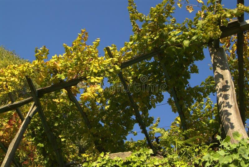 Download Vigne Di Canavese - Vicino Al Piccolo Villaggio Cesnola, Italia Immagine Stock - Immagine: 103085503