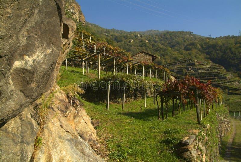 Download Vigne Di Canavese - Vicino Al Piccolo Villaggio Cesnola, Italia Immagine Stock - Immagine: 103085607