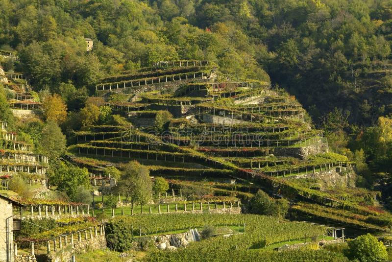 Download Vigne Di Canavese - Vicino Al Piccolo Villaggio Cesnola, Italia Immagine Stock - Immagine: 103085763